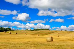 curvy barley field with straw bales and blue cloudy sky - stock photo