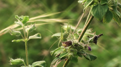 A green cricket sits on a flower Stock Footage