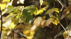 Small Plant in Autumn Slow Pan Stock Footage