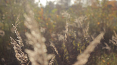 Autumn Grass With Blurred Background 4 Stock Footage