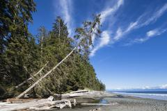 Canada, British Columbia, Vancouver Island, Juan de Fuca Provincial Park - stock photo