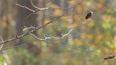Autumn Tree With Spiderweb Stock Footage