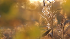 Autumn Grass With Blurred Background 12 Stock Footage