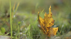 Golden Leaf in Grass With Blured Background Stock Footage