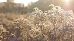 Autumn Grass With Blurred Background 8 (Slow Pan) Stock Footage