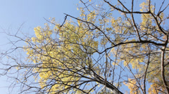 The Top of Trees in Autumn Slow Pan Stock Footage