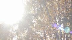 Autumn Tree Leaves 8 (Slow Pan) Stock Footage