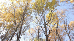 The Top of Trees in Autumn 2 Slow Pan Stock Footage