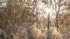 Autumn Grass With Blurred Background 10 (Slow Pan) Stock Footage