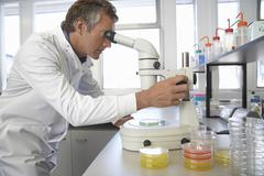 Scientist Adjusting Microscope To Examine Petri Dish - stock photo