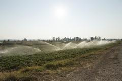 Croatia, Dalmatia, Biograd n Moru, irrigation of fields Stock Photos