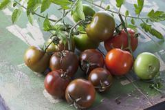 Sardinian tomaatit (Solanum lycopersicum), studio shot Kuvituskuvat