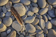 Seagull feather on ruby beach Stock Photos