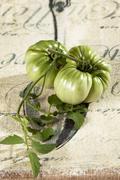 Raakoja vihreä naudanliha tomaatit (Solanum lycopersicum) Kuvituskuvat