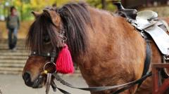 Small Horse Pony Stock Footage
