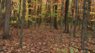Running through woods in the fall 2 Stock Footage