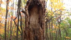 Monster tree Stock Footage