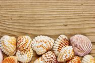 Stock Photo of sea shells on old wooden board