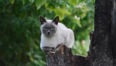 Cat Resting On A Tree Stump Stock Footage