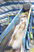 Rubbish On Conveyor Belt In Recycling Factory Stock Photos