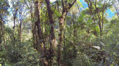 Ascending through the canopy of montane rainforest  Stock Footage