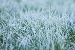Frozen morning dew Stock Photos