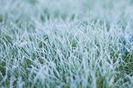 Stock Photo of Frozen morning dew