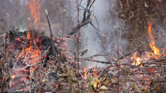 Danger of forest fire - unattended fire near the forest 4 Stock Footage