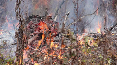 Danger of forest fire - unattended fire near the forest 5 Stock Footage