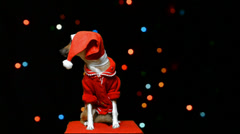 Dog in Santa Claus hat - stock footage