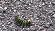 Green Fruitworm Stock Footage