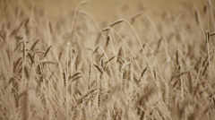 Harvest 2 Stock Footage