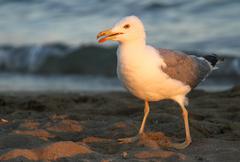Elegant white seagull on the shore of the beach Stock Photos
