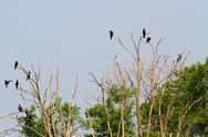 Stock Photo of black vultures and crows in the uninhabited island