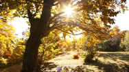 Stock Video Footage of Autumn trees in the park