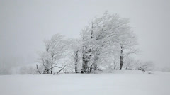 Snow covered trees. Snowfall - stock footage
