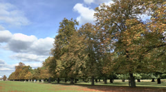 Autumn in Bushy Park, London - stock footage