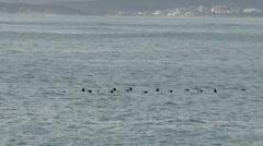 Flock of birds flying across the ocean Stock Footage