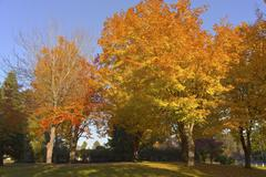 autumn colors in a park. - stock photo