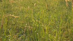 Green grass sunlight summer park garden meadow pasture sunset nature natural sun Stock Footage