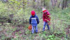 Kids are looking for mushrooms in the forest Stock Footage