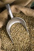 raw coffee seeds bulk scoop burlap bag agriculture bean - stock photo
