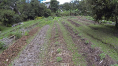 Flying over a tropical organic vegetable garden in Ecuador Stock Footage