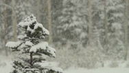 Stock Video Footage of Colorado Winter