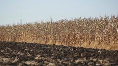 Corn field 09 Stock Footage