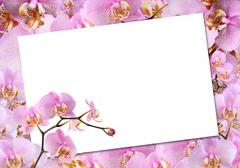 Greeting card with orchids Stock Photos