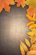Autumn greeting card Stock Photos