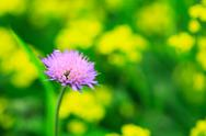 Stock Photo of pink wildflower