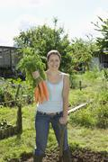 Woman Harvesting Organic Carrots - stock photo