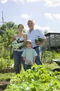 Family Holding Vegetables In Community Garden Stock Photos
